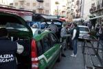 Palermo, 300 cardellini liberati alla Favorita: due persone denunciate