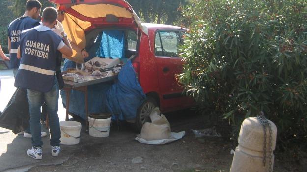 capitaneria, multe, pesce, Palermo, Cronaca