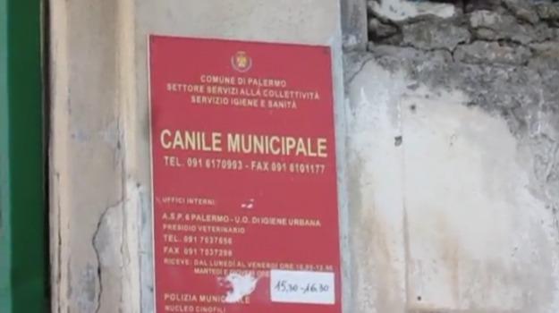 animali, cani, canile, lavori, Palermo, Cronaca