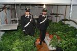 In casa una serra per cannabis: arrestati marito e moglie