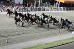 Siracusa, My Saxy Week conquista la corsa clou di galoppo