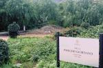 Sos dalla villetta «Paolino Giordano» a Palermo: erbacce, alberi da potare e degrado