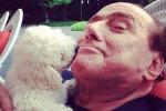 La barboncina di casa Berlusconi dà alla luce tre cuccioli: le foto