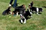 Nati i primi cani in provetta, nuova frontiera per la cura dell'uomo