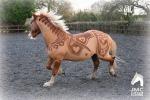 Opere d'arte disegnate sul corpo: come i cavalli cambiano look