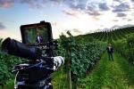 Il rito della vendemmia in un cortometraggio: set in Sicilia