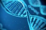 Nuova mappa del Dna distingue i geni ereditati dal padre e dalla madre
