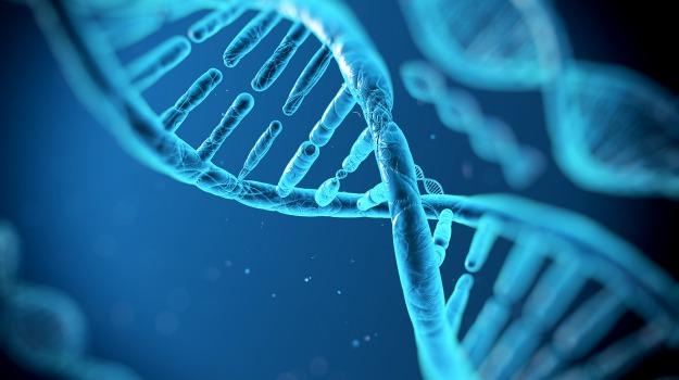 DNA, vita, Sicilia, Società