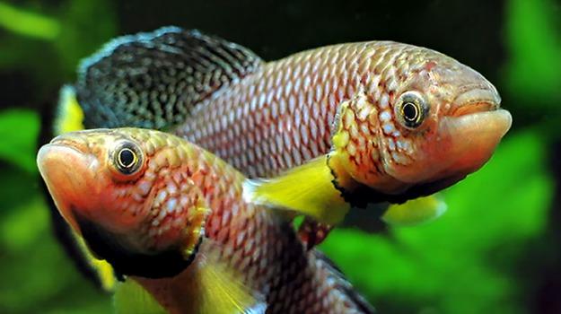 invecchiamento, pesce, Sicilia, Società