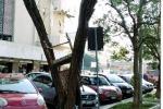 """Protesta per i rifiuti a Mondello, a Palermo """"germoglia"""" pure l'albero delle sedie"""