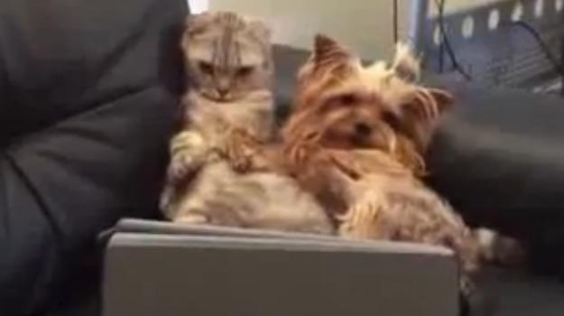 Chi Lha Detto Che Cane E Gatto Non Possano Essere Amici Video