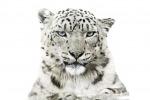 WWF, il calendario 2016 dedicato alle specie a rischio - Foto