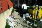 Nella via a ostacoli slalom tra erbacce e rifiuti e nella villetta tre carcasse di auto abbandonate