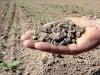 Lavoro, i giovani scelgono l'agricoltura: domande per contributi, Sicilia in testa