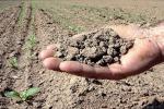 Pachino in corteo contro la crisi agricola