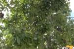 Agrigento, continua l'abbattimento degli alberi