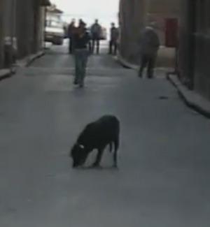 Randagi, i volontari: 120 animali adottati tra Sciacca e Menfi