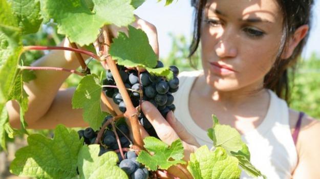 agricoltura è donna, assessorato, Palermo, Vita