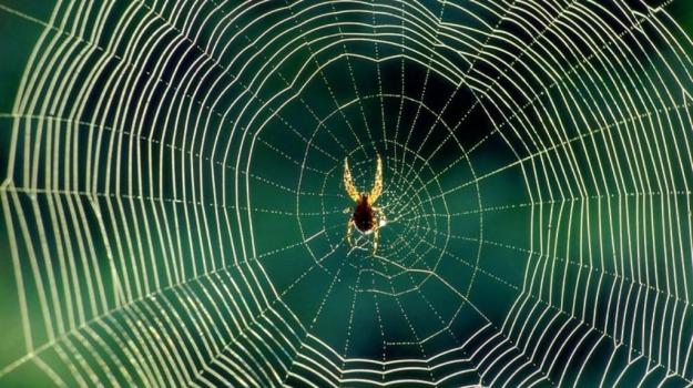 spiderman, università, Sicilia, Società