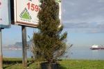 Palermo, l'albero di Natale installato dal Comune in via Messina Marine è ancora lì