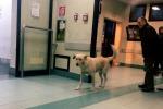 Palermo, al pronto soccorso scatta l'«sos»... randagi: in sala d'attesa cani tra i pazienti