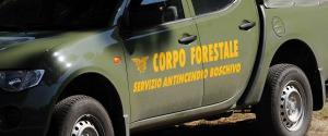 """Manovra, i sindacati all'Ars: """"I fondi per i forestali siano inseriti in finanziaria"""""""