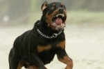 Cani maltrattati a Catania, quattro denunce