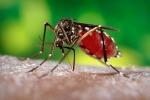 Virsu Zika, nuovo caso a Roma: salgono a 9 in Italia
