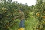 Agricoltura, entro maggio nuovi bandi con fondi europei
