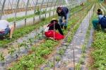 Cgia, record di contratti a termine al Sud: agricoltura e turismo i settori con più precari