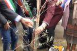 Immigrazione, a Palermo un albero per il siriano Aylan