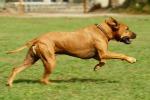 La ricerca: anche ai cani si può misurare il quoziente intellettivo