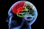 Clima che cambia, rischi anche per il cervello