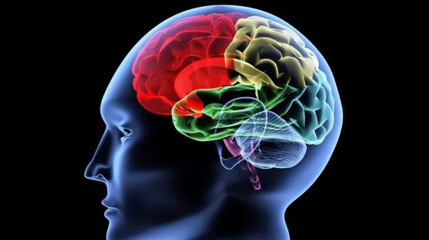 cervello, rughe, Sicilia, Cronache della Salute, Vita