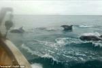 Delfini saltano tutti insieme: spettacolo in mare - Video