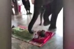 Elefante massaggia i turisti: nuova moda in Thailandia - Video