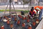 Operai al lavoro: prende vita il roseto di viale Lazio a Palermo - Video