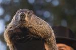 Altro che inverno, la primavera è già alle porte: le previsioni della marmotta Phil