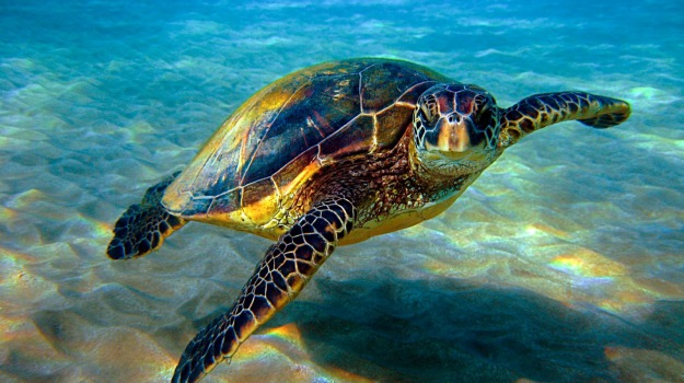 Isole Egadi tartarughe, Trapani, Società