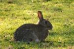 Pochi conigli sui Nebrodi, esplode la protesta dei cacciatori