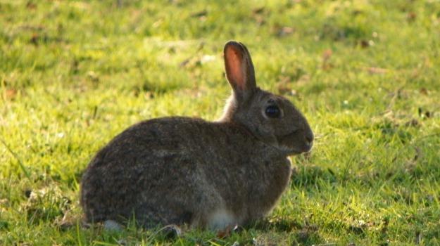 cacciatori, conigli, Messina, Cronaca