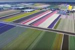 """La primavera """"geometrica"""" in Olanda, le immagini mozzafiato riprese da un drone - Video"""