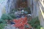 Erbacce e scarti, a Palermo sottopasso sulla circonvallazione vietato ai pedoni