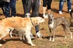 Trapani, a breve un'area per la sgambatura dei cani