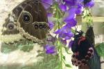 """Inaugura a Modica la """"Casa delle Farfalle"""": le foto"""