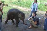 In Thailandia l'elefante che ama le coccole: il video