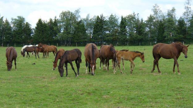 Centro regionale di produzione e allevamento del cavallo di razza, Franches Montagnes, Sicilia, Economia