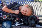 """Labrador """"fiuta-diabete"""" salva il suo padroncino di 7 anni: la storia di Luke e Jedi"""