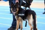 Cane poliziotto trova hashish nel Cas per migranti di Ragusa