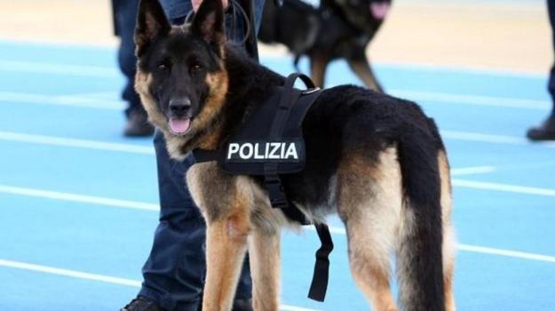 cane poliziotto vittoria, Ragusa, Cronaca